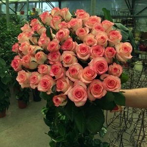 51 розовая роза Джумилия в Мариуполе фото
