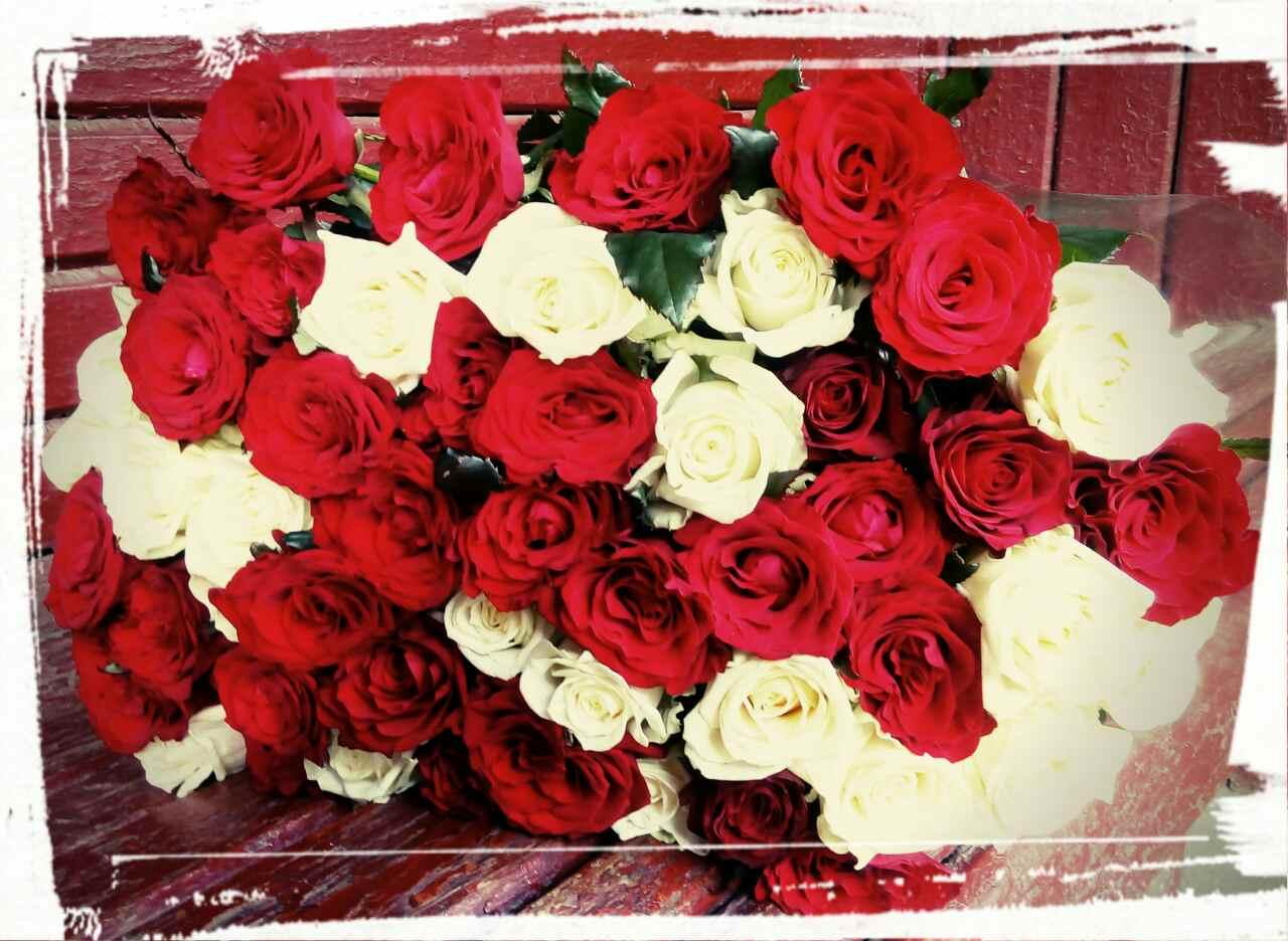 Цветы купить в мариуполе, комнатные