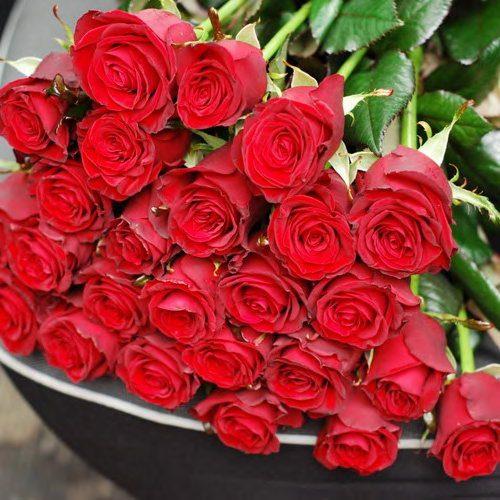 51-красная роза фото