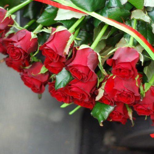 розы в мариуполе фото
