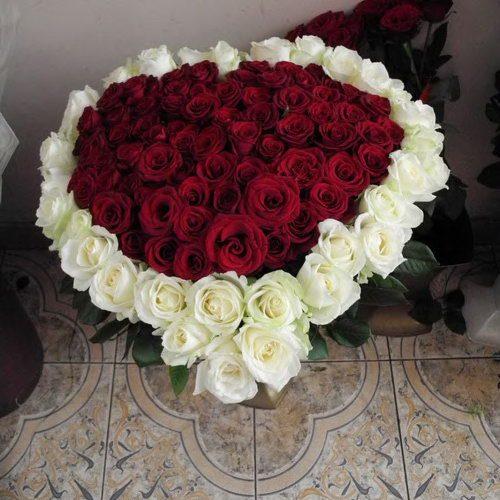 101 роза сердце фото