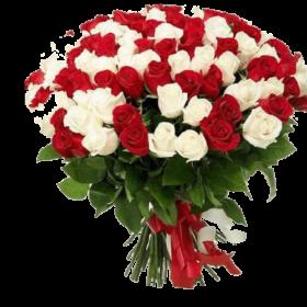 акция 101 красно-белая роза