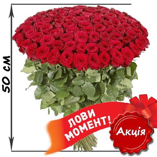 Фото товара 101 красная роза (50см)