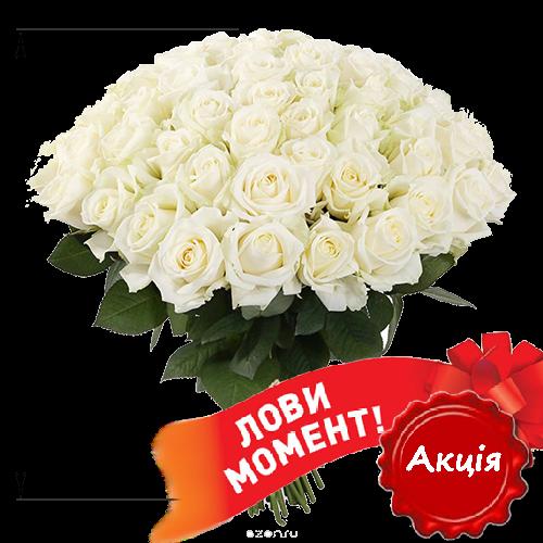 Фото товара 51 белая роза (50 см)