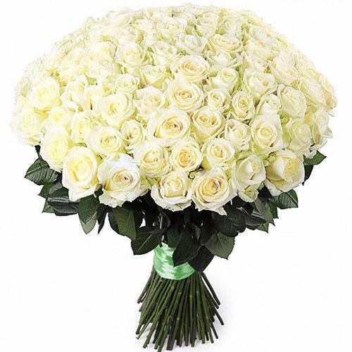 Фото товара 101 белая роза
