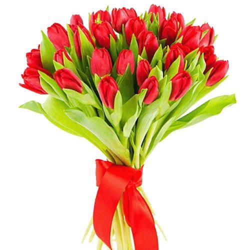 Фото товара 25 красных тюльпанов