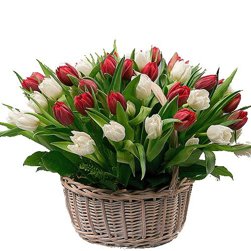 Фото товара 51 тюльпан в корзине