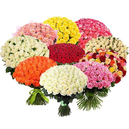 картинка 1001 роза разных сортов
