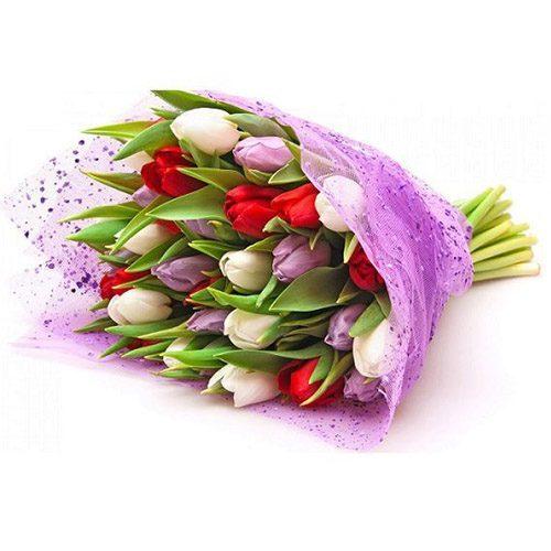 Фото товара 21 тюльпан ассорти (красный, белый, сиреневый)