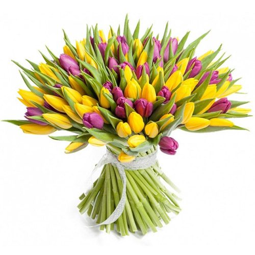 Фото товара 75 фиолетово-жёлтых тюльпанов