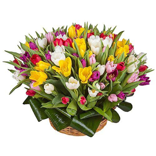 Фото товара 75 тюльпанов микс (все цвета) в корзине
